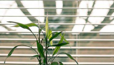 Houten jaloezieen botanisch interieur