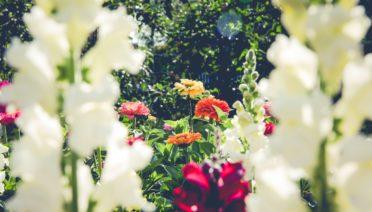 stijlvolle tuin